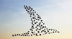 flock-of-brids